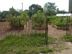 Garden view - donated fencing