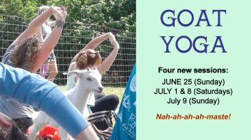 goat-yoga-summer-2017-details_2_orig